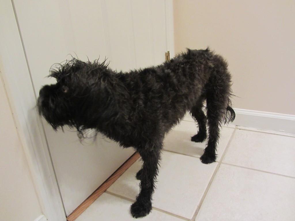 dog, black, bathroom, door, bath