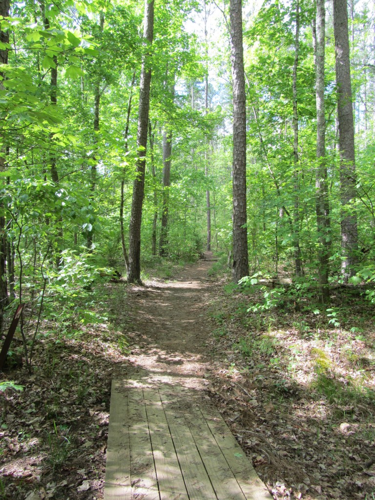 Sherwood Forest Camp Trades Weekend - wooded path