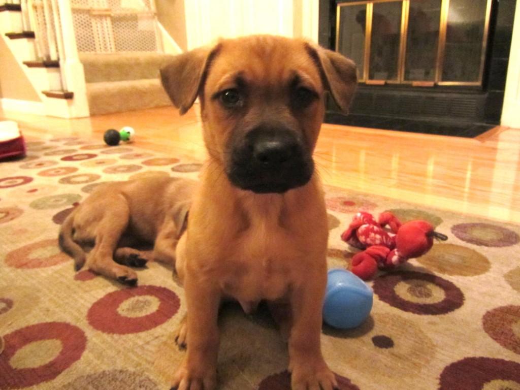 Jojo rescue puppy 1