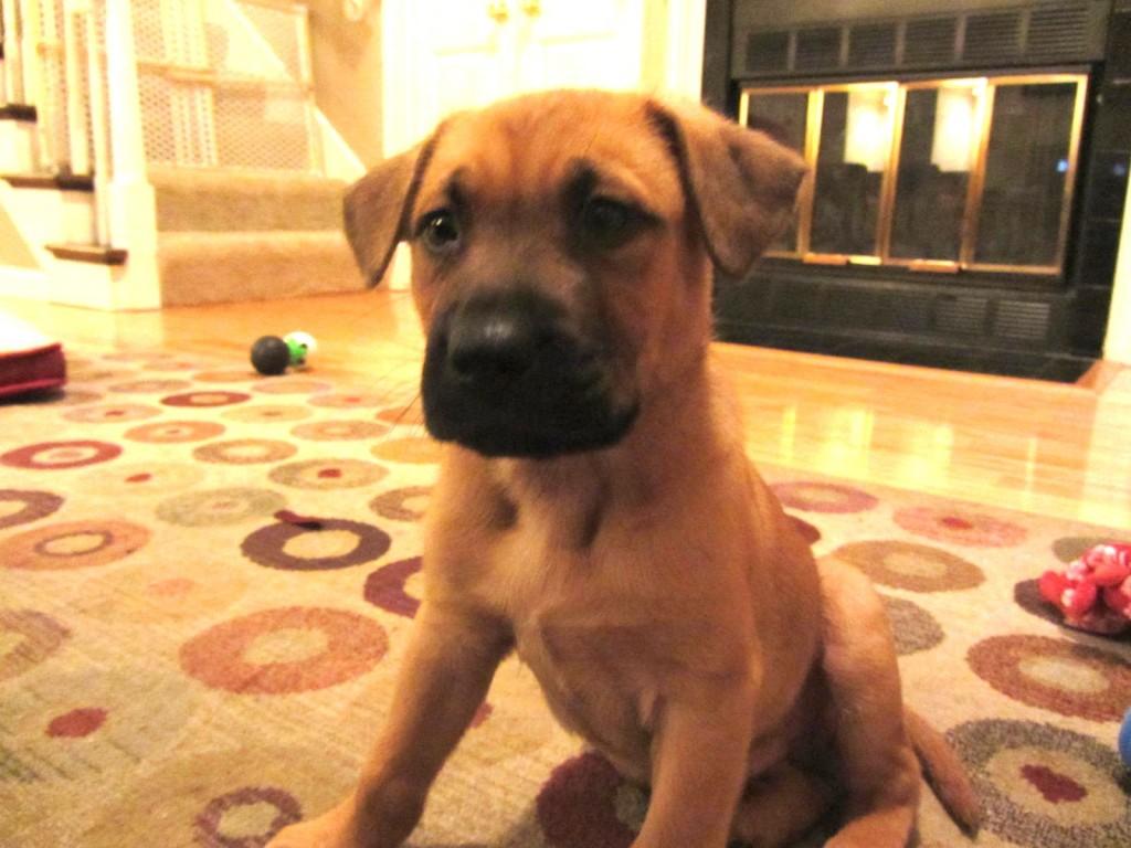 Jojo rescue puppy 2