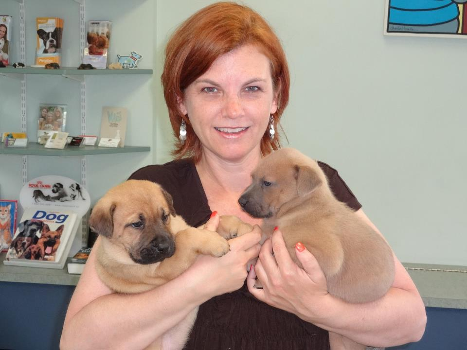 Karen's First Foster Pups – Jojo and Sylvie