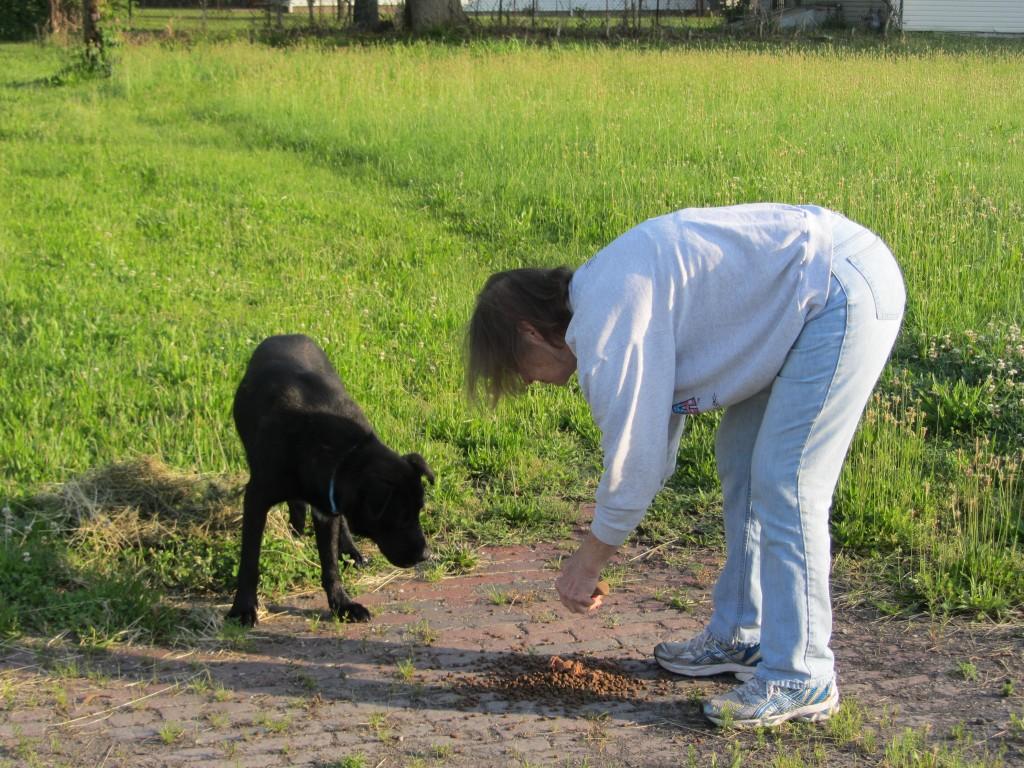 PJ with Gateway Pet Guardians feeding a black dog