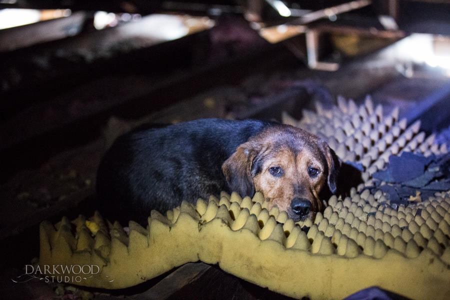 Before rescue - in attic