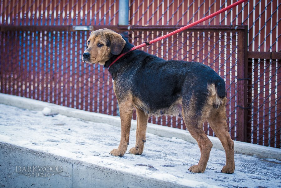 Rescue - Padme at shelter