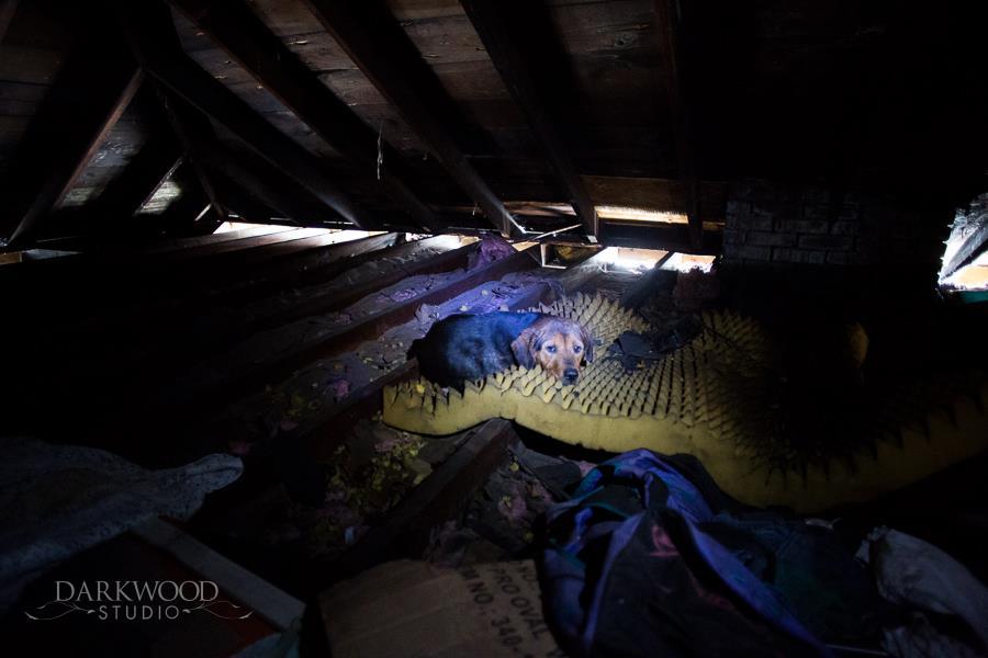 Rescue - Padme in attic