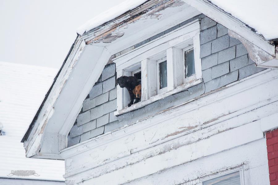 Rescue - attic closeup