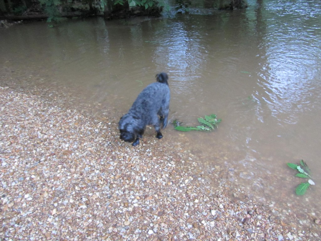 Dog in water at campground