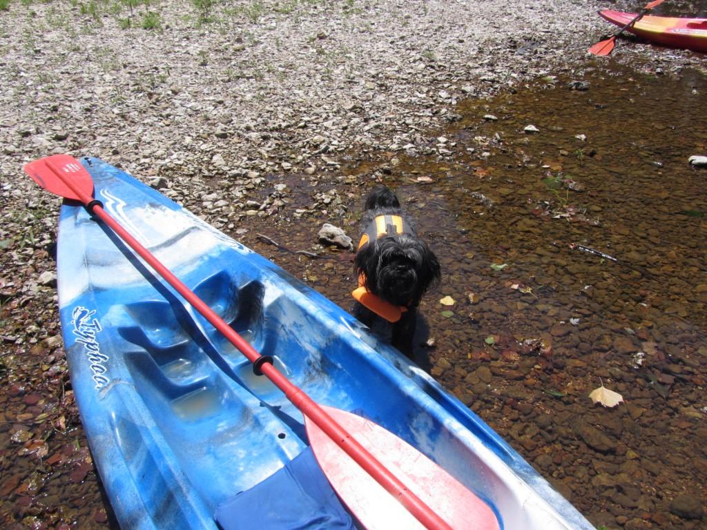 Dog and kayak