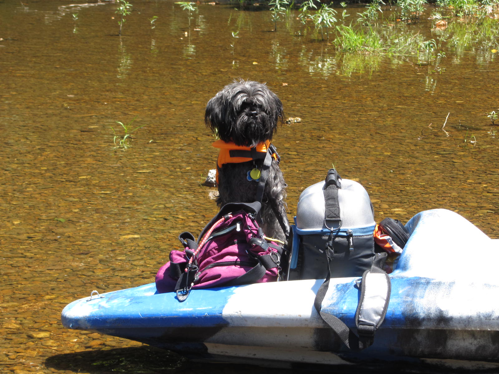 My Dog Milo Went Kayaking and Rafting