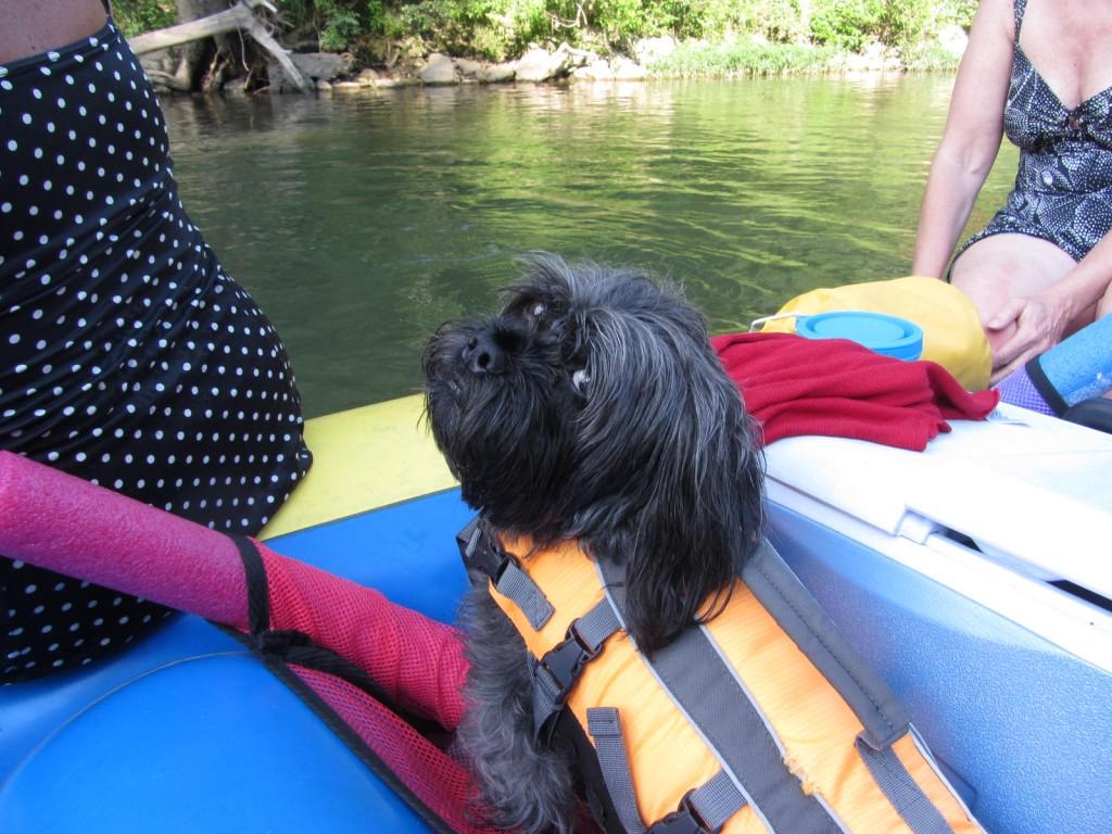 Milo enjoying a raft ride