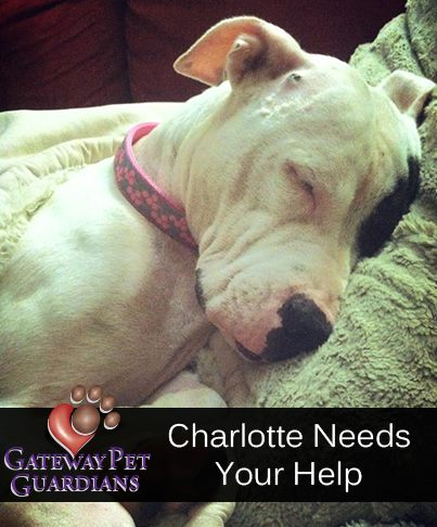 Saving Charlotte ~ Gateway Pet Guardians to the Rescue