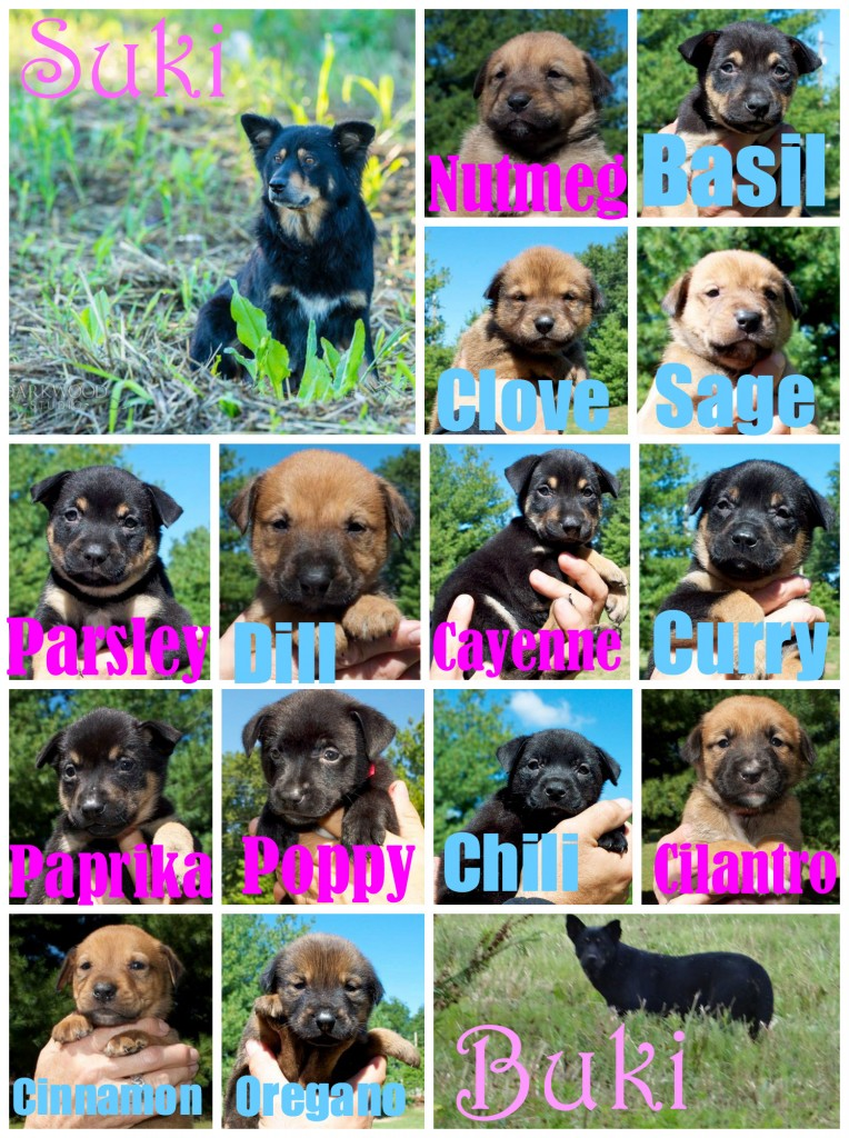 Puppy collage - adopt a puppy in St. Louis