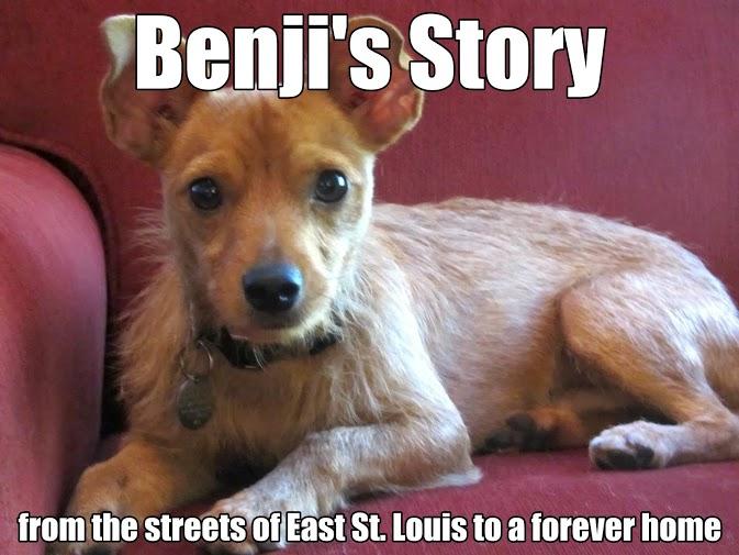 Letting Benji Go