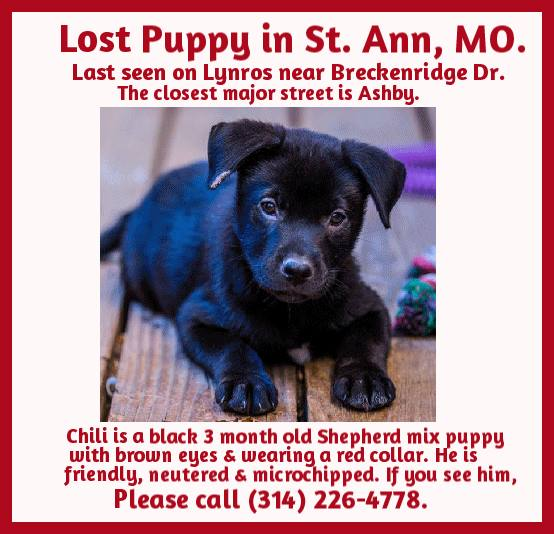Lost puppy - Chili