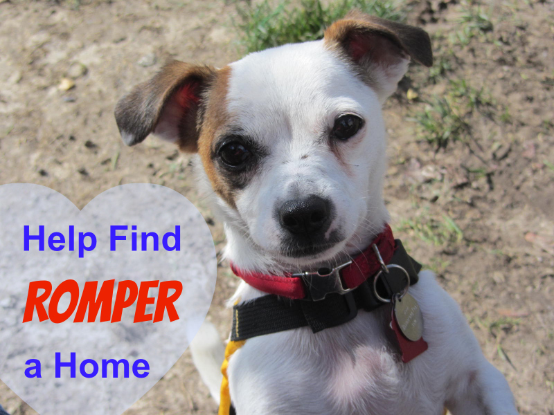 Help Me Find a Forever Home for My Foster Dog Romper