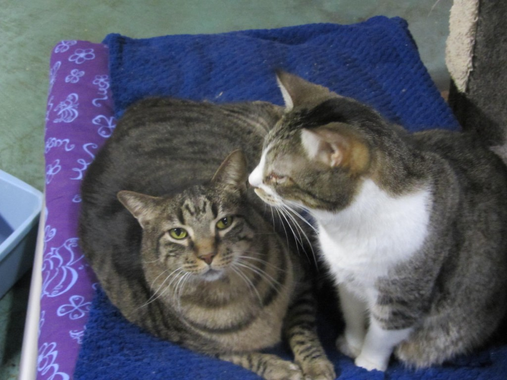 Clowder House cats cuddle together