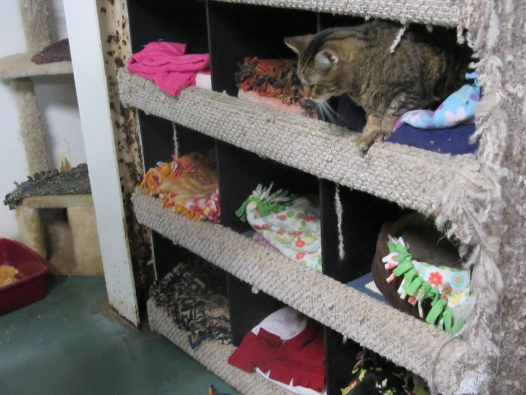 Clowder House cats sleeping in cubbies