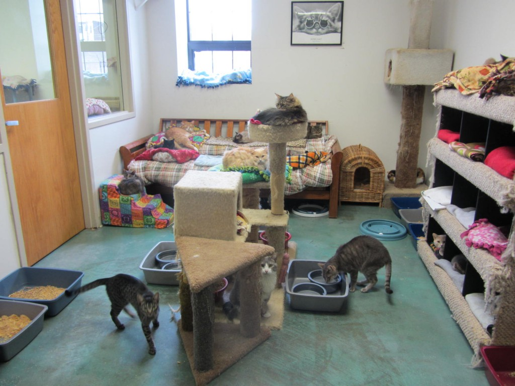 Clowder House cat room