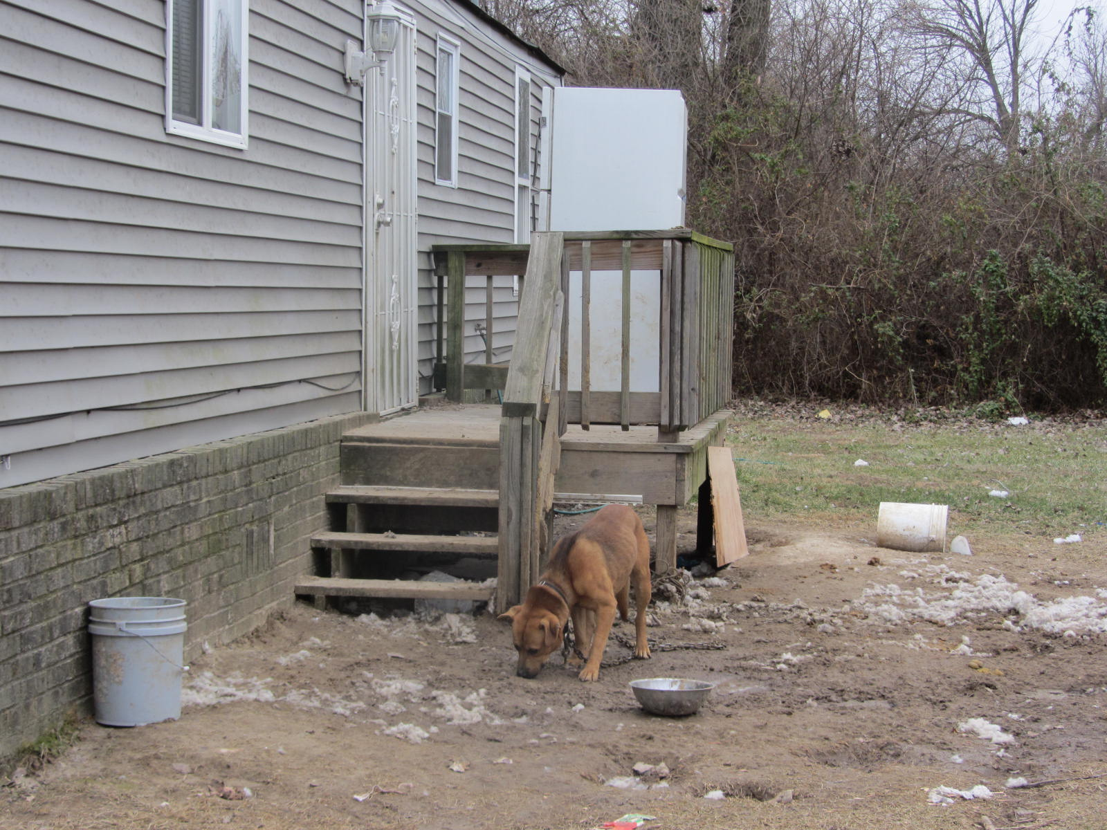 East St. Louis dog needing dog house