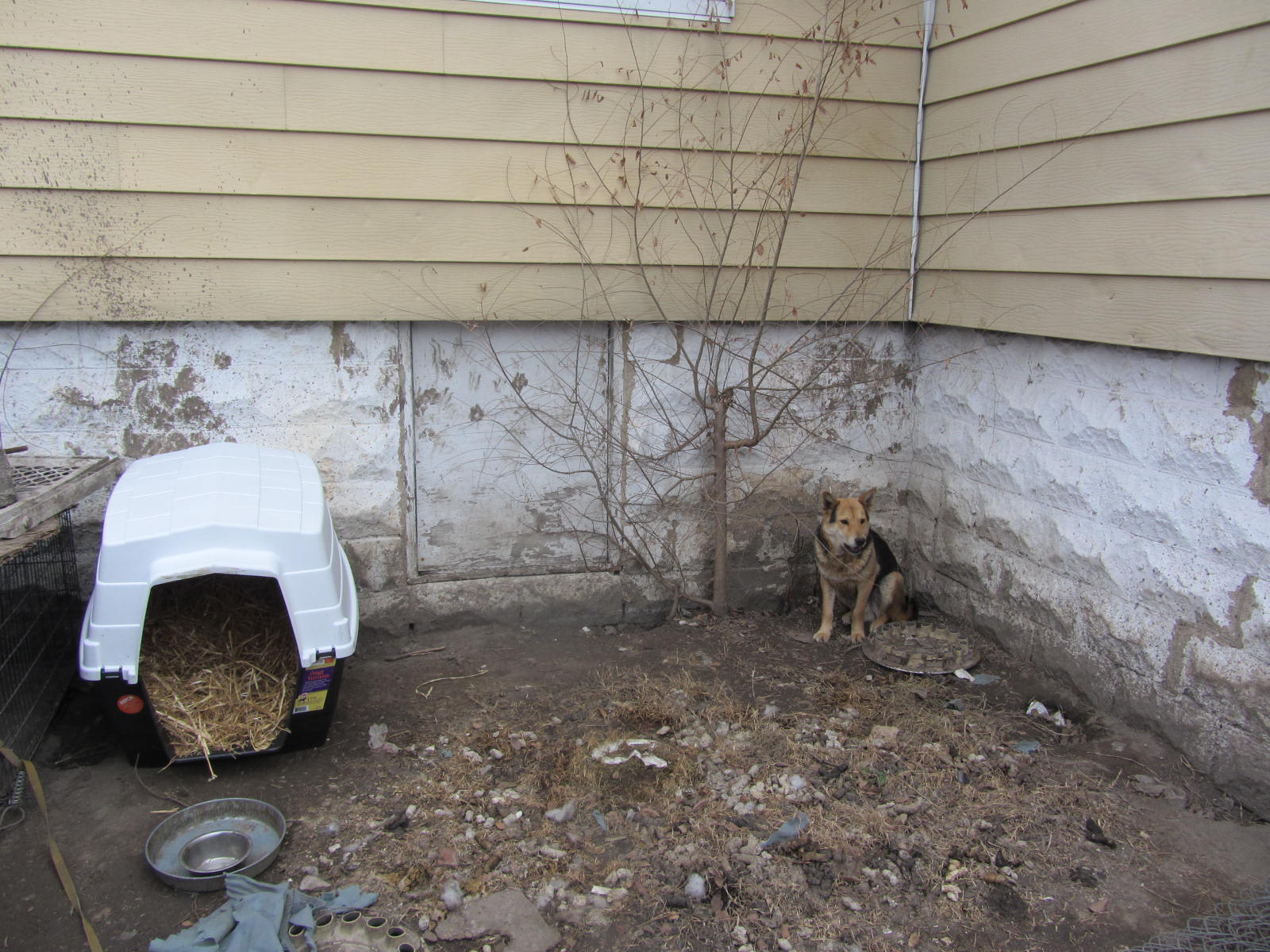 Gateway Pet Guardians dog house ready for new owner