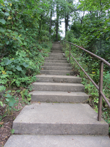Sherwood Forest Camp steps