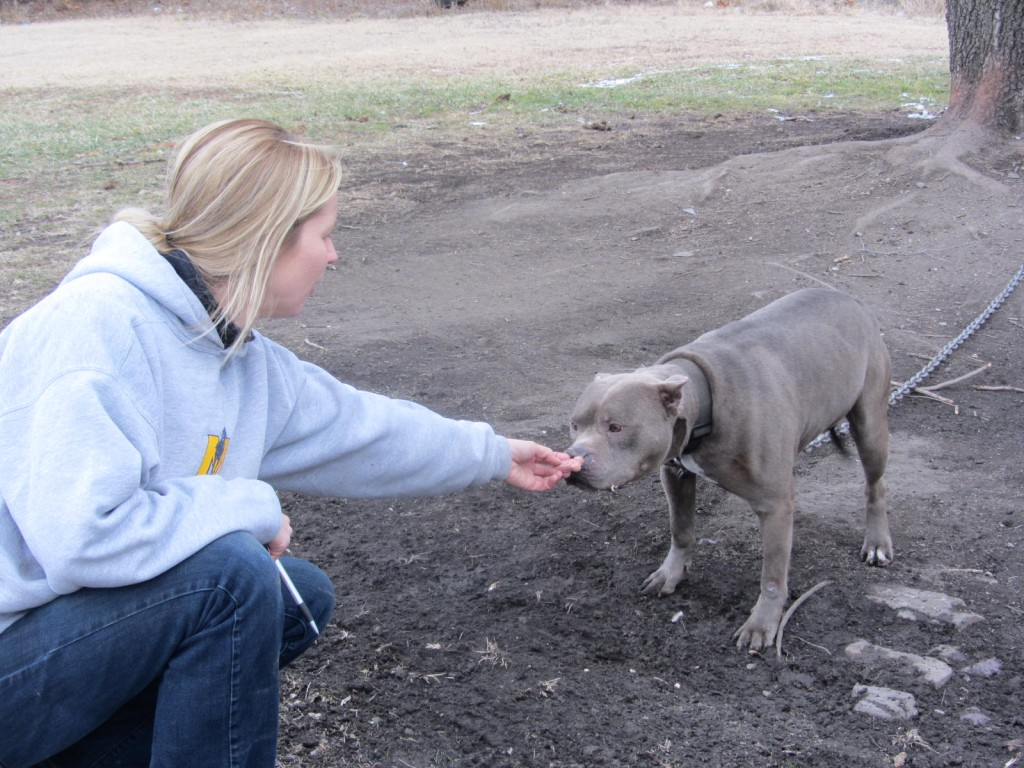 Gateway Pet Guardians volunteer feeds dog