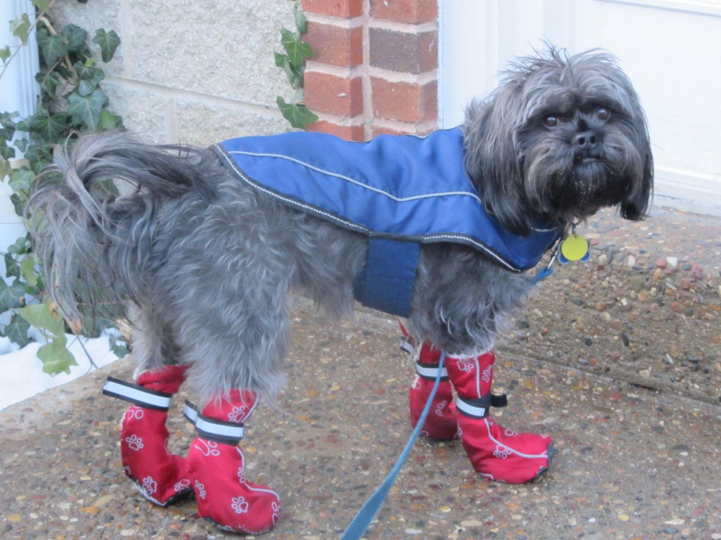 Milo in boots