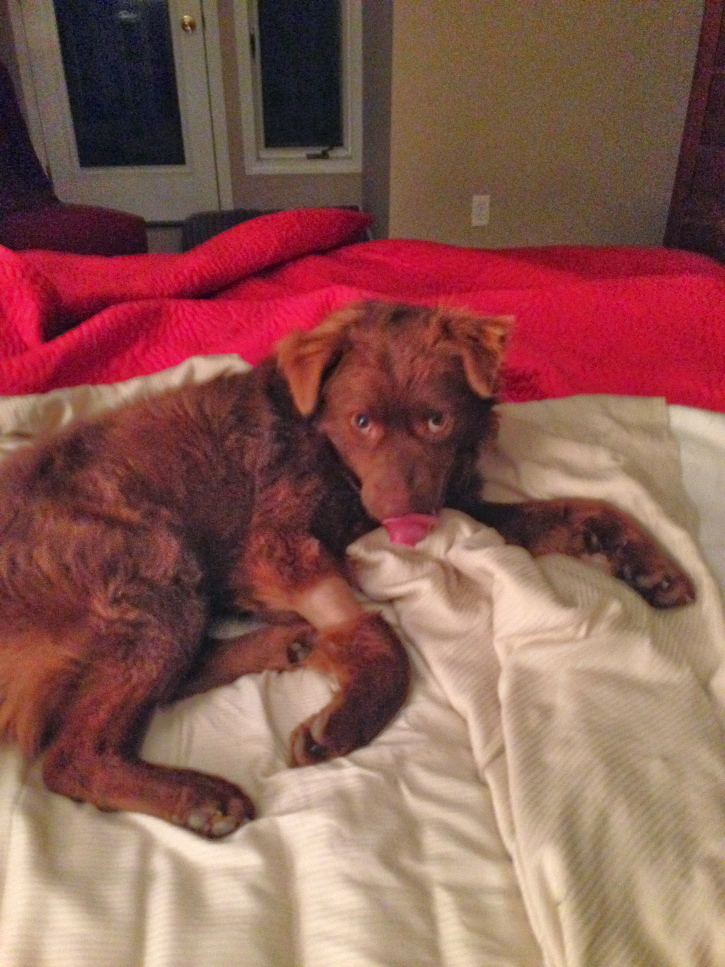 Wordless Wednesday – Teddy Finally Jumps on the Bed