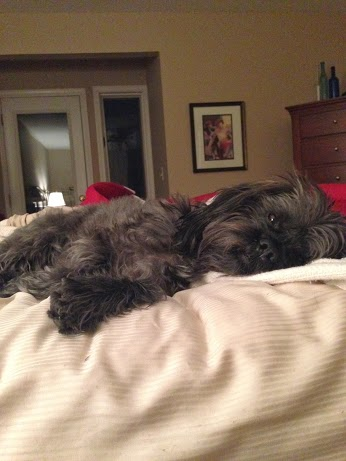 Wordless Wed - Milo on bed