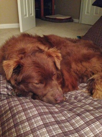Wordless Wed - Teddy sleeping