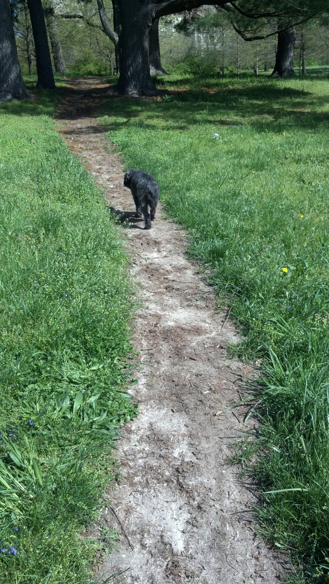 Milo sticks to the path