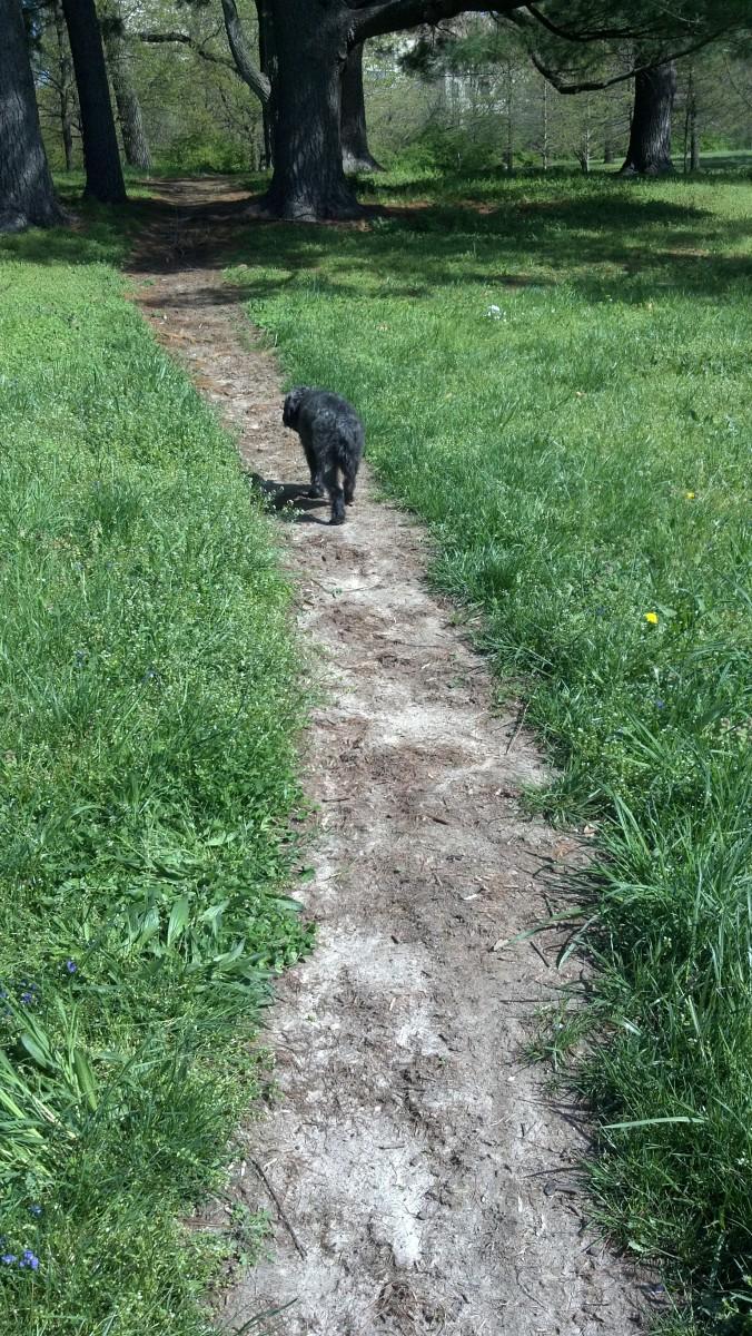 Milo sticks to the path