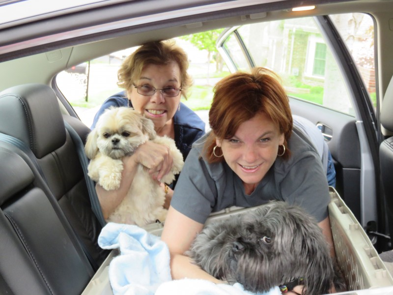 On the Road to Vegas…with Dogs!