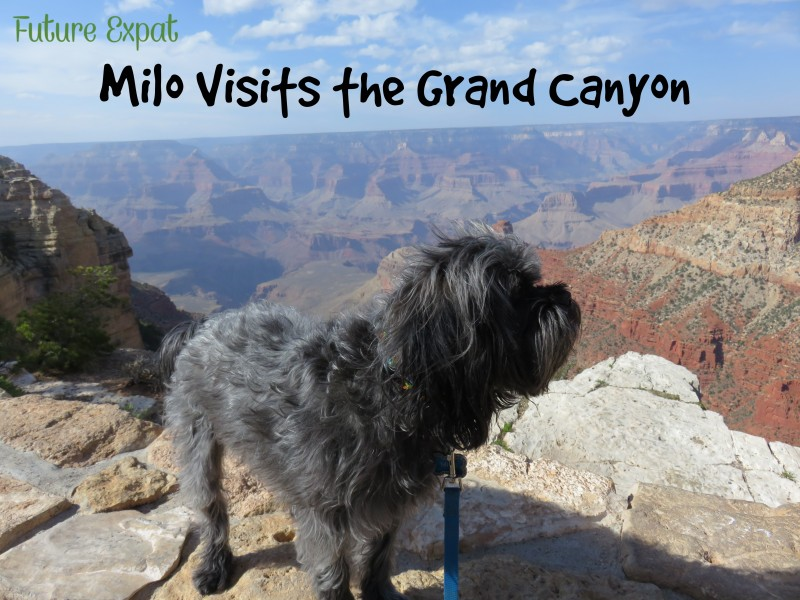 Road Trip ~ Grand Canyon Visit with Dogs