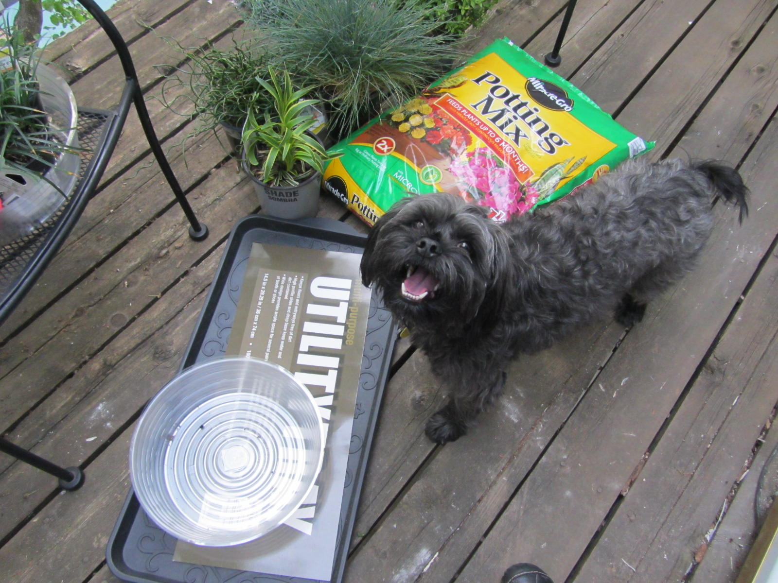Create a Dog Potty Garden on Your Deck