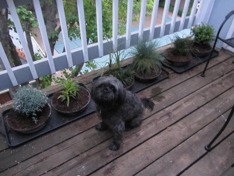 Dog Potty Garden - Future ExpatDog Potty Garden - Future Expat