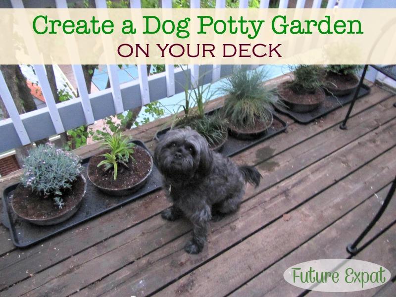 Dog Potty Garden - Future Expat