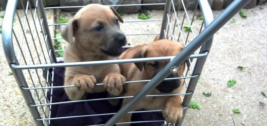 Puppies in cart - Future Expat