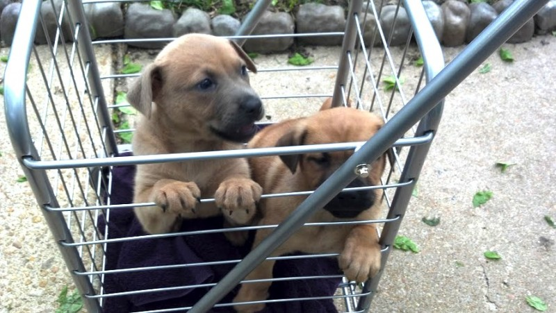 Shopping Cart Solution for 'No Paws on Ground' Puppies - Future Expat