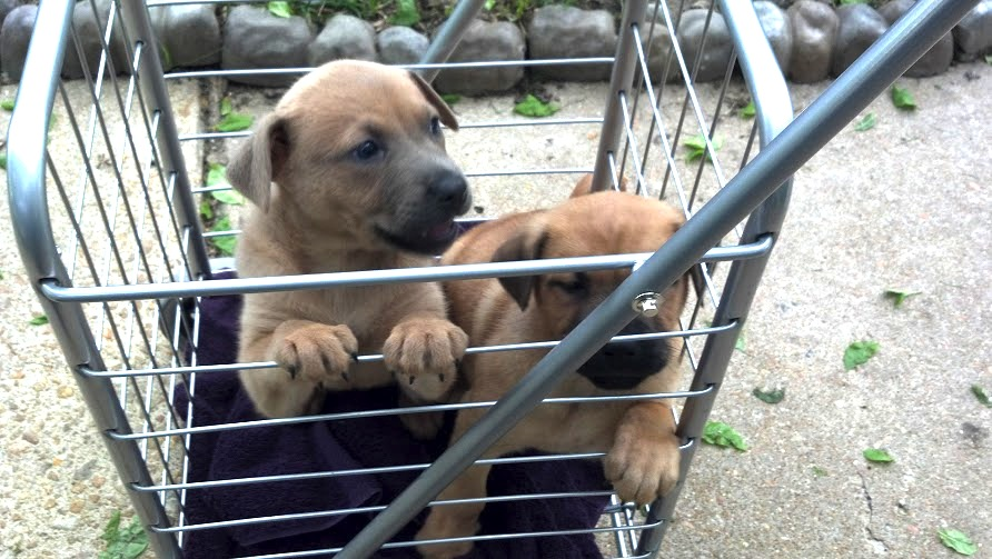 Shopping Cart Solution for NO PAWS ON GROUND Puppies