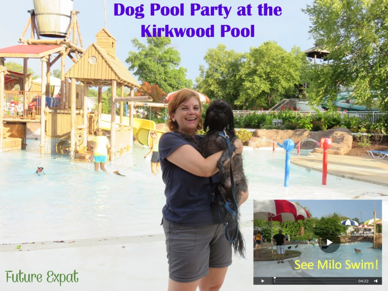 St. Louis Dog Pool Party - Future Expat