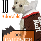 10 Adorable Dog Halloween Costumes - Future Expat