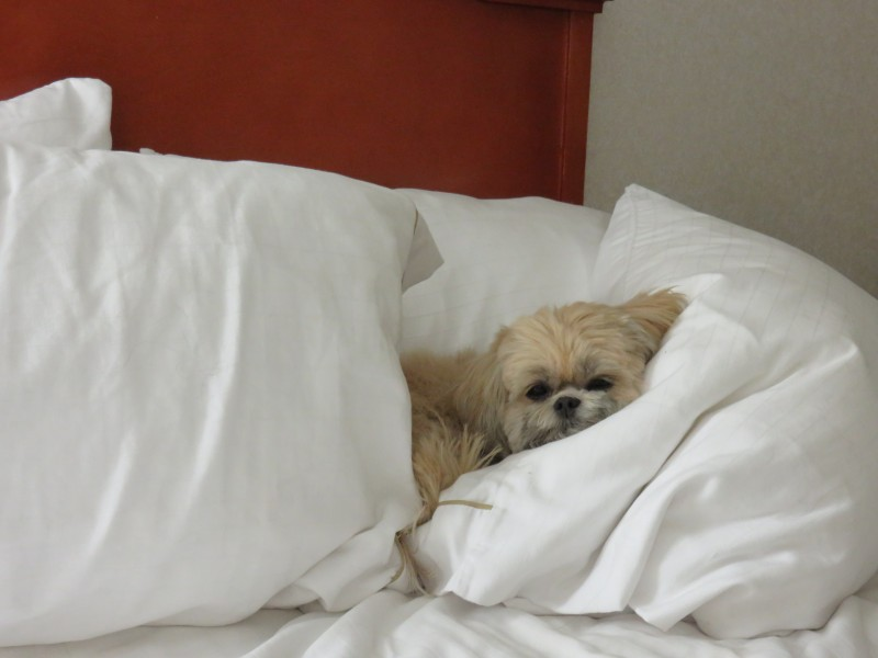 Travel with Dogs - Pet Friendly Hotel - Holiday Inn Express Sante Fe, NM