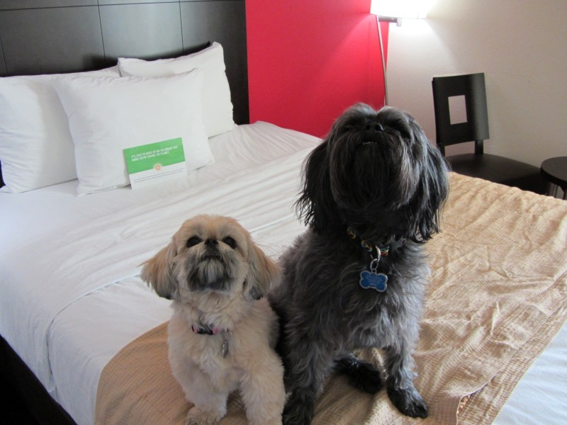Travel with Dogs - Pet Friendly Hotel - La Quinta (Elk City, OK)