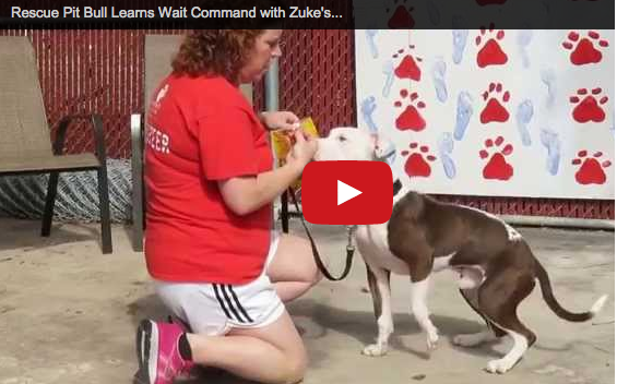 Rescue Dog Gilbert Trained with Zuke's Treats (GIVEAWAY)