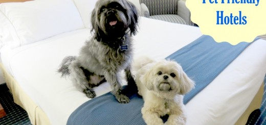 Road Trip with Dogs - Choosing Pet Friendly Hotels