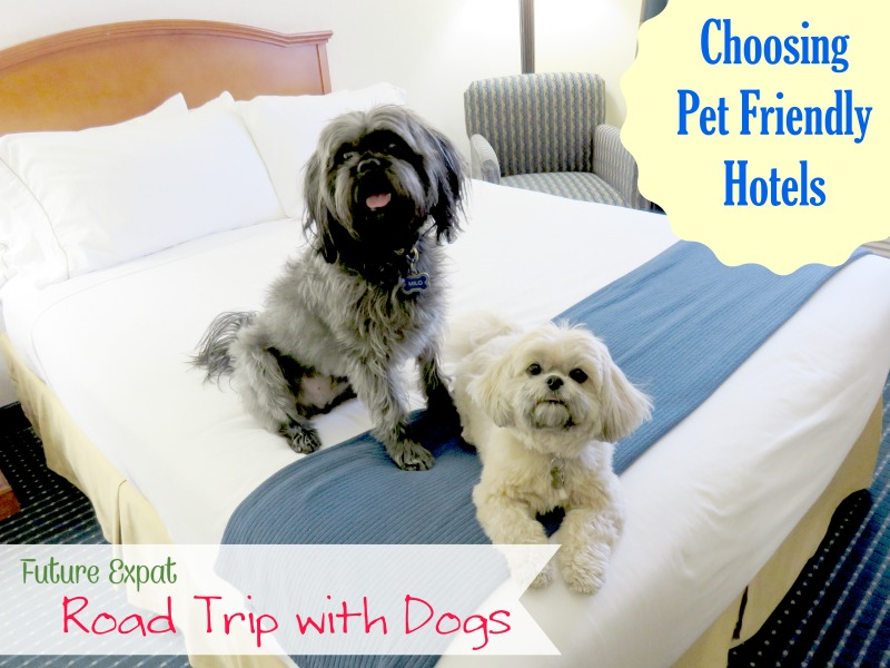 Road Trip with Dogs – Choosing Pet Friendly Hotels