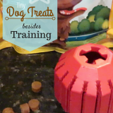 10 Ways to Use Tiny Dog Treats Besides Training - Future Expat