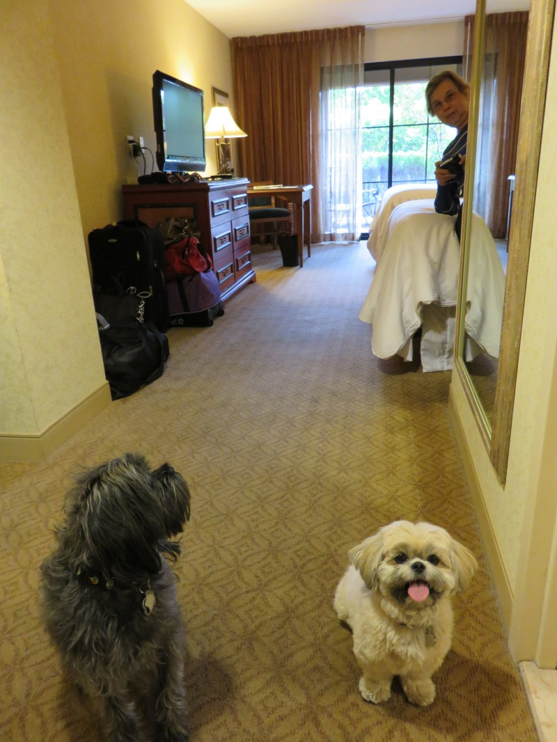 Lessons Learned from Road Trip with Dogs - Future Expat