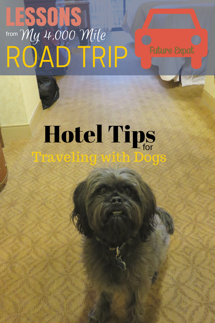Lessons from My 4000 Mile Road Trip: Hotel Tips for Traveling with Dogs
